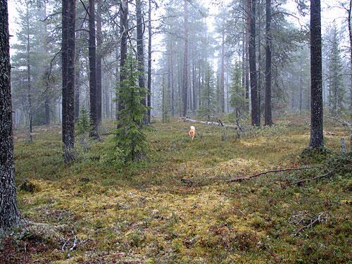 2007 © Eero Niku-Paavo