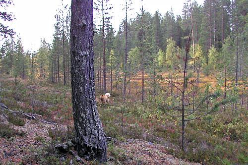 2006 © Eero Niku-Paavo