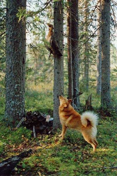 Rovaniemi 1996 © Eero Niku-Paavo