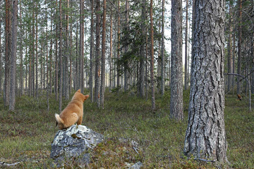 2011 © Eero Niku-Paavo