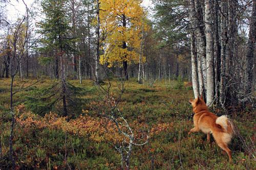 2012 © Eero Niku-Paavo
