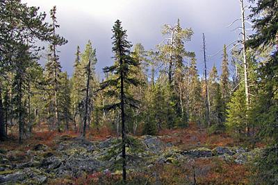 Riistalle ja luonnon virkistyskäytölle arvokas luontokohde Savukoskella 2007 © Eero Niku-Paavo