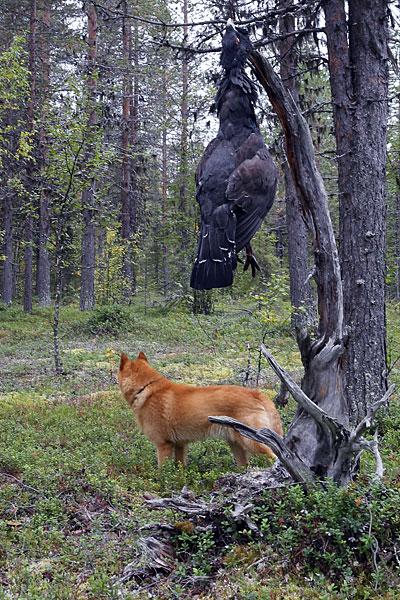 Jällivaara 2011 © Eero Niku-Paavo